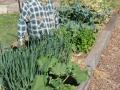 Arcadia PS Vegie garden 2012 (1) (683x1024)